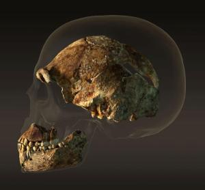 0904_Human_Skull_Persp_Peter_Ohne_Schatten_sf_Kamera-7_001.ngsversion.1441922404572.adapt.676.1